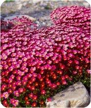 Купить почвопокровные розы киев купить садовые розы в оренбурге